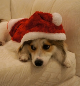 Christmas-Santa-Puppy