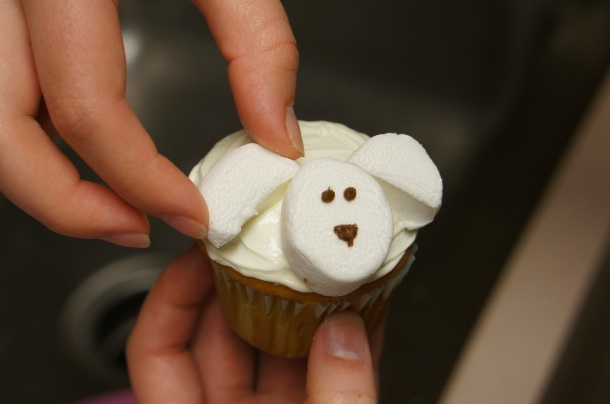 adorable-animal-cupcakes